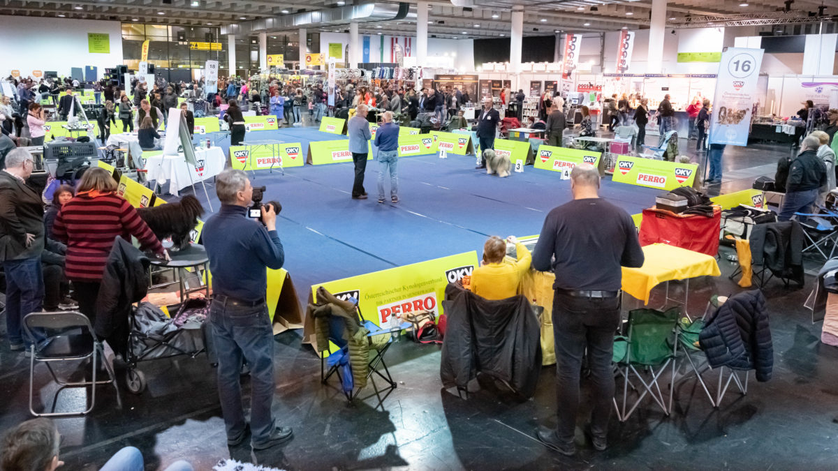 Internationale Rassehundeausstellung 2020, Messe Graz Halle A (c)MCG, Wiesner (69)